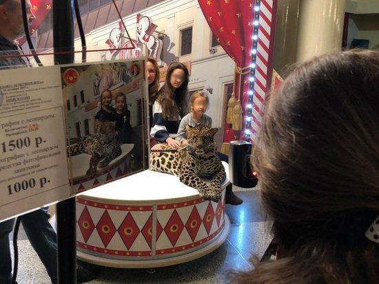 Леопарда, напавшего на девочку в цирке Никулина, до сих пор фотографируют с детьми