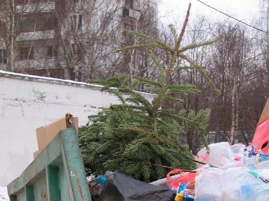 Москвичей призвали избавиться от новогодних елок: опасны для жизни