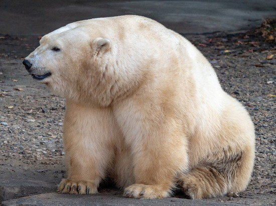 В Эстонии усыпили подаренного Россией медведя