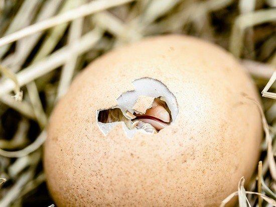 Яйцо-рекордсмен из Instagram