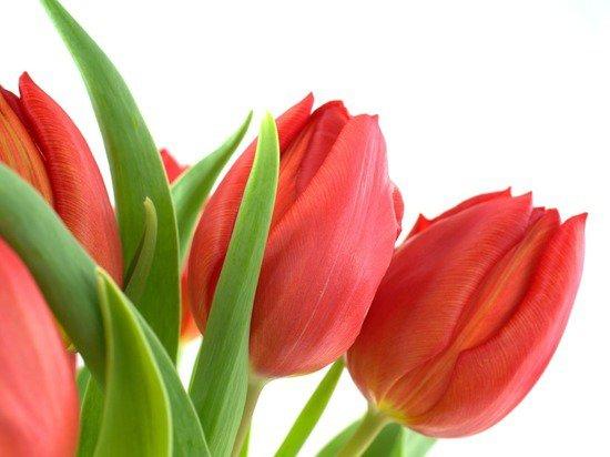 Эксперты подсчитали траты россиян на День святого Валентина