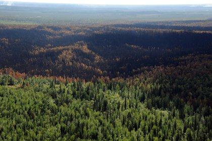 Экологи предсказали исчезновение российского леса через 10 лет