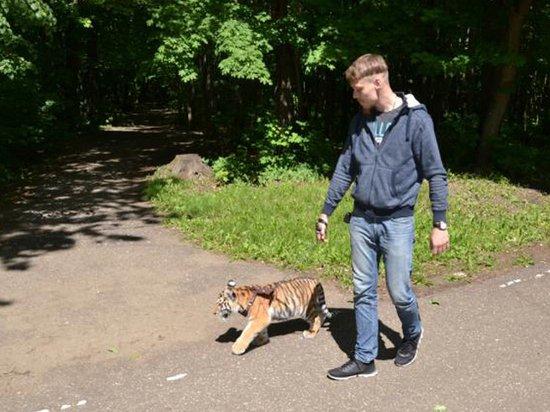 Гуляющий с тигром на поводке пензенец объяснил свое поведение