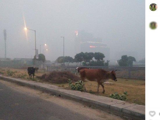 Загрязнение воздуха превратило Дели в