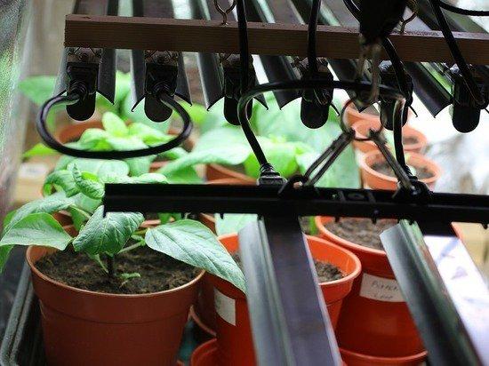 Чем опасны фитолампы для растений