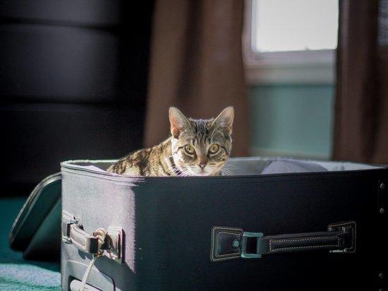 История с толстым котом в самолете затмила худых котов