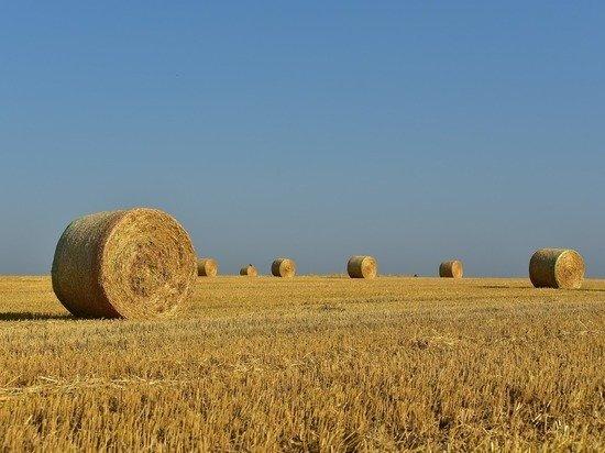 Продовольствие в безопасности: как сельское хозяйство стало локомотивом экономики