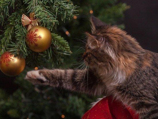 «На веселье нет денег»: почему россиян раздражают новогодние каникулы