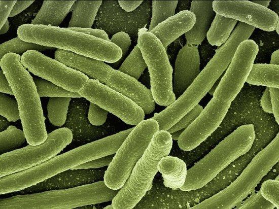 Миру угрожает супербактерия