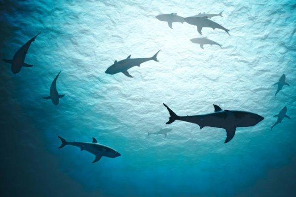 В Австралии акулы съели 21-летнего немецкого футболиста