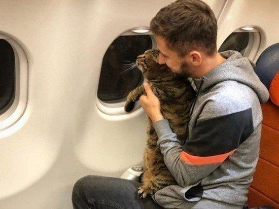 Минтранс сохранит старые правила перевозки домашних животных в самолетах