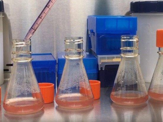 Вакцина от коронавируса будет готова через год-полтора