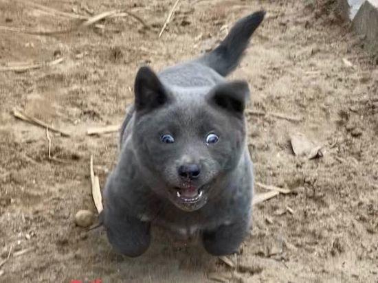 Похожий на помесь кошки и собаки «котопес» покорил интернет