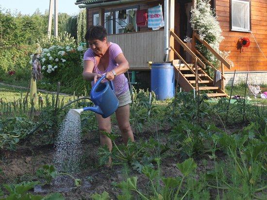 Идею временно раздать огороды людям эксперт назвал вредной
