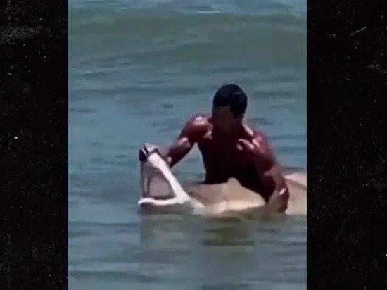 Появилось видео, как мужчина голыми руками поймал акулу