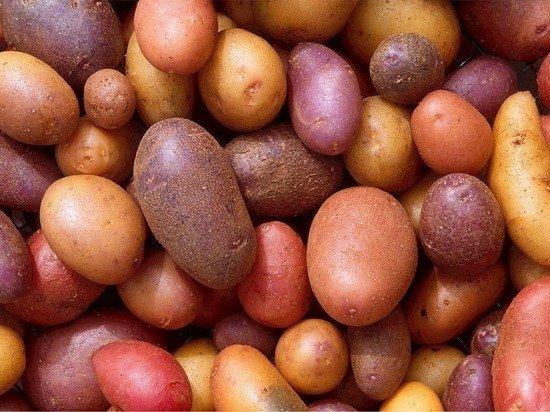 Рост цен на картошку связали с нехваткой гастарбайтеров