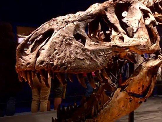 Скелет тираннозавра Стэна был продан за рекордные $31,8 млн