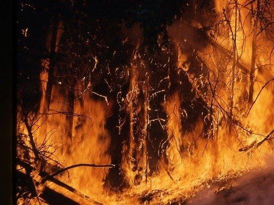 В Госдуме предложили учитывать ущерб здоровью от лесных пожаров