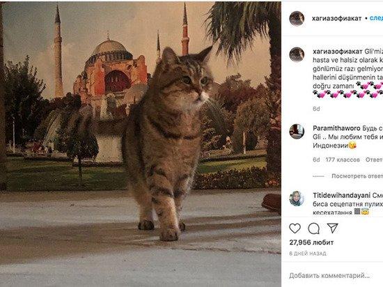 Умерла кошка Гли, ставшая одним из символов Стамбула