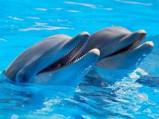 КНДР уличили в создании армии дельфинов