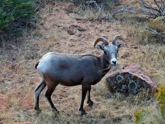 Алтайским экологом, подозреваемым в браконьерстве, занялась генпрокуратура
