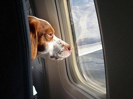 В США запретят брать животных в салон самолета для «моральной поддержки»