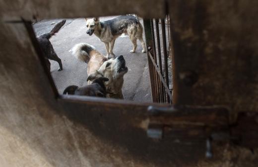 Зоозащитник оценила запуск сервиса по поиску домашних животных в Москве