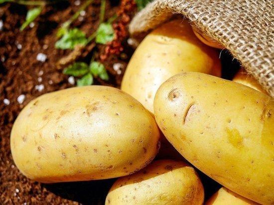 Россиянам пригрозили штрафами за продажу картофеля