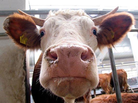 Фермеры дали советы по содержанию животных в морозы