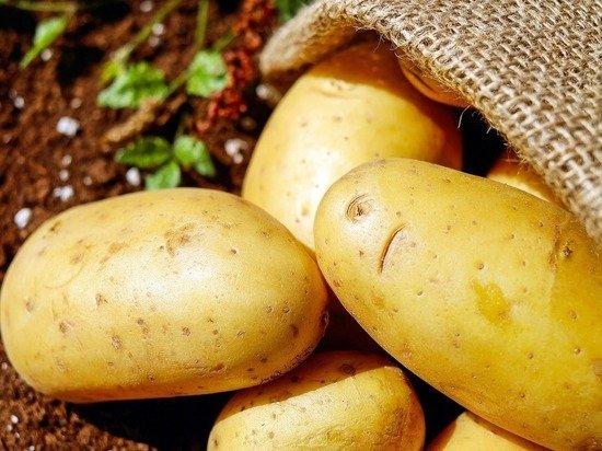 В России случилась овощная аномалия с ценами на картошку