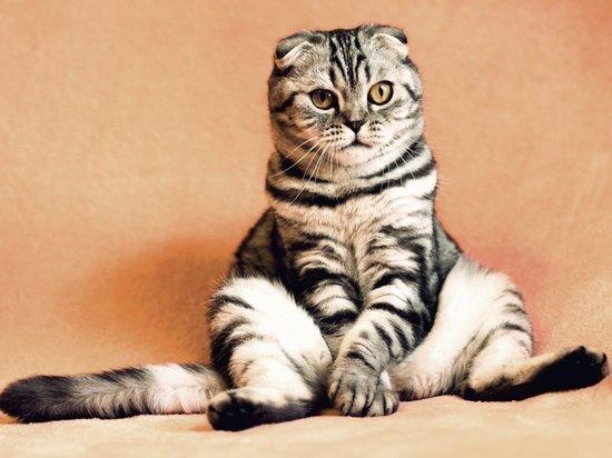 В петербургских учреждениях культуры пройдет перепись котов