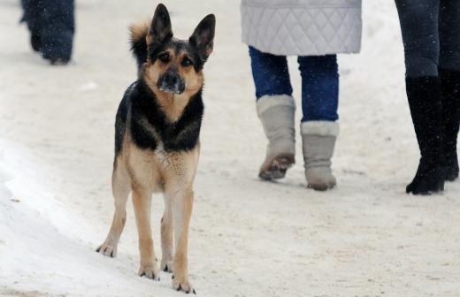 Жители Нижегородской области сфотографировали стаю синих собак в Дзержинске