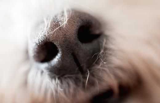 Кинологи рассказали о способности собак выявлять болезни