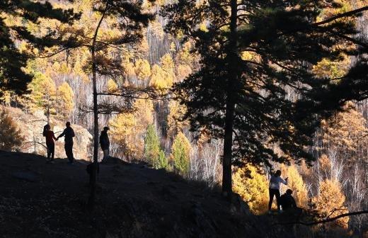 Степные бизоны из Латвии поселятся в Плейстоценовом парке в Якутии