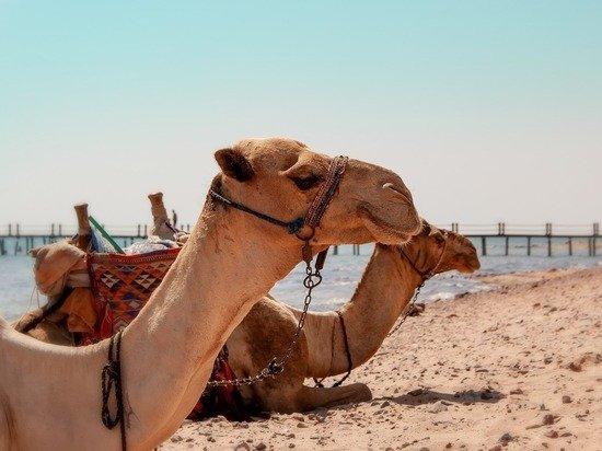 Открытие Египта для российских туристов приготовило неприятные сюрпризы