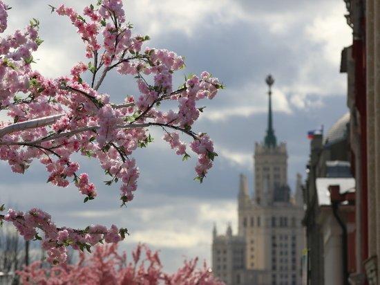 Названы условия для объявления нерабочих дней между майскими праздниками