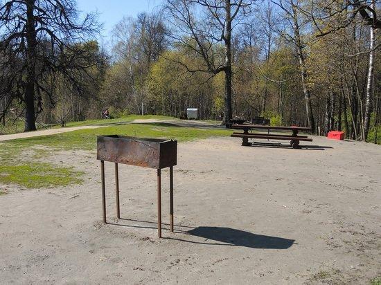 В Подмосковье с 1 мая запретят жарить шашлыки в лесу