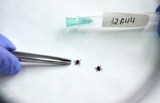 Энтомолог предупредил об опасности подцепить клеща на прогретой поляне