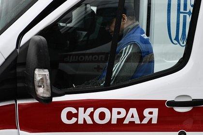 Бродячие собаки насмерть загрызли ребенка в российском городе