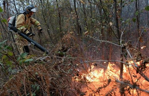В Московской области с 1 мая запретят посещать леса и жарить шашлыки