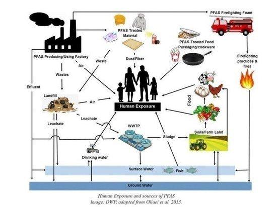 В овощах и коровах обнаружили тревожные уровни токсичных PFAS