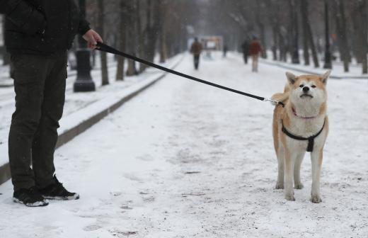 Путин подписал закон о запрете изымать домашних животных за долги