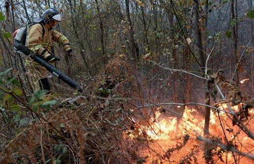 Вильфанд предупредил о высоком риске пожаров в Сибири и на Урале