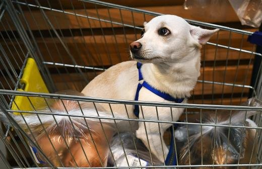 Названы победители чемпионата РФ по танцам с собаками