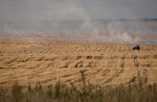 В Госдуме опровергли сообщения о штрафах за сорняки на дачах