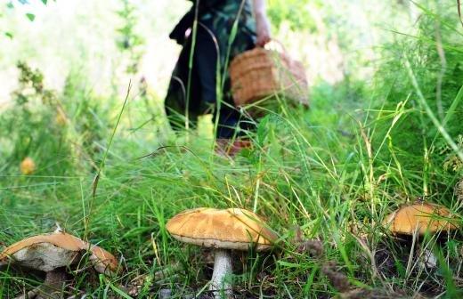 Глава Минздрава Омской области пропал без вести во время охоты