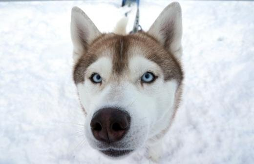 В Подмосковье ввели штрафы за нарушение правил выгула собак