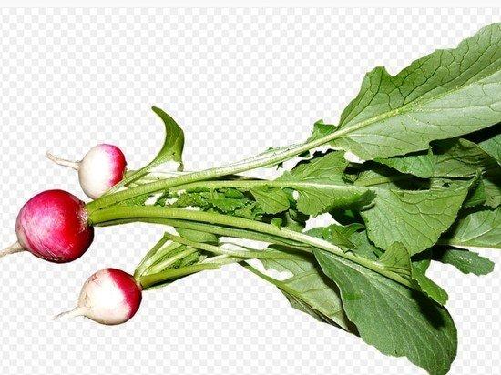 Диетолог объяснил, кому нельзя употреблять в пищу редис