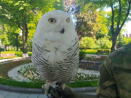 Кремль начала охранять полярная сова