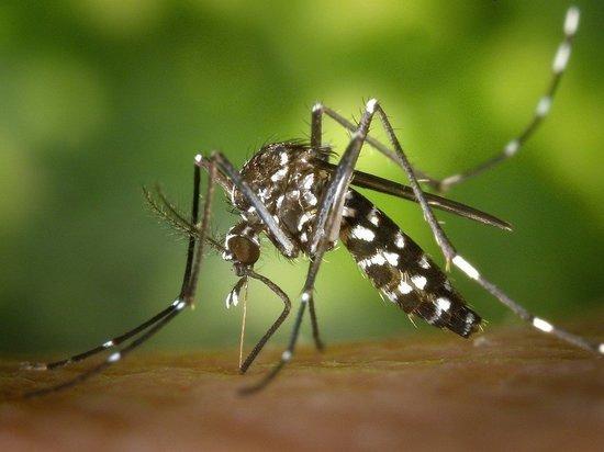 Роспотребнадзор предупредил о наличии опасных насекомых на юге РФ
